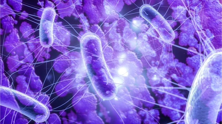 mikrobiota